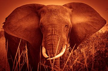 Elefant von Anita Loos