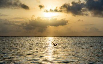 Héron au coucher du soleil sur Stijn Cleynhens