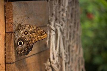 Butterfly von Margo Smit