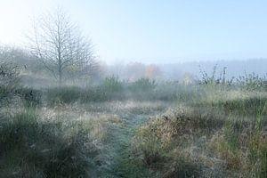 Paysage rural de prairies avec des herbes, des buissons de genêts et des arbres dénudés dans la brum