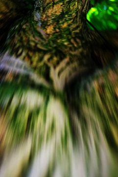 Exotische boom - liefdesdans van L.P.L. Mazzacani