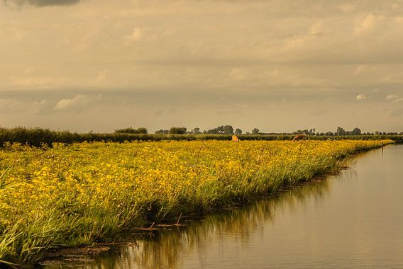 Avondzon over het Jisperveld van Edwin van Amstel