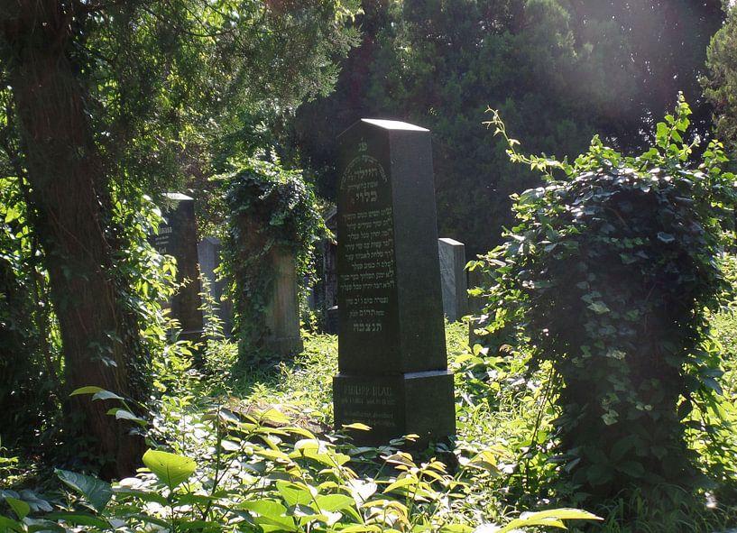 Zentralfriedhof 1 van Ilona Picha-Höberth