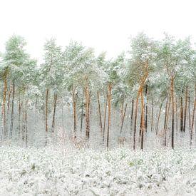 Besneeuwde bomen van Greetje van Son