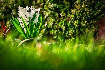 Der Frühling kommt von Foto Oger