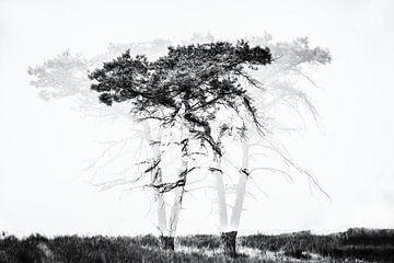 abstrakter Baum von Ingrid Van Damme fotografie