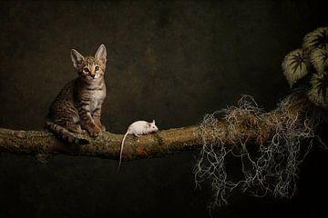 Katz und Maus von Carolien van Schie