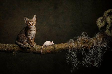 kat en muis van Carolien van Schie