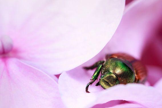 Beetle on purple flower
