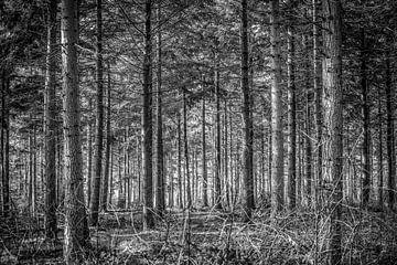 Door de bomen het bos niet meer zien van Fotografie Jeronimo