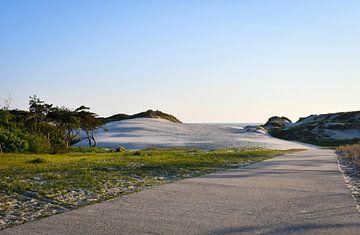 Wandelpad door de duinen