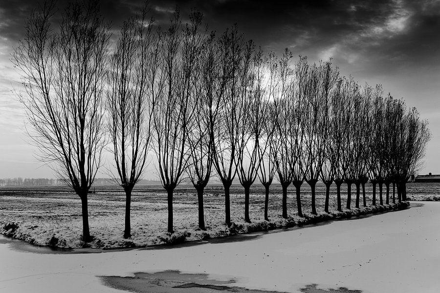 Alblasserwaard met rij bomen
