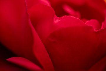 Rote Abstraktion von roten Rosenblättern von J..M de Jong-Jansen