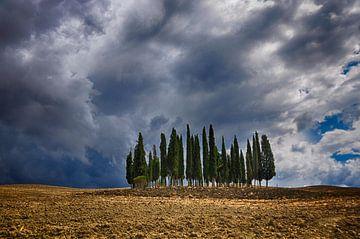 Dreigende wolken boven Toscaanse cipressen van Thea Oranje