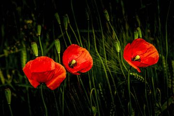 Wald Blumen Feld Landschaft Erzgebirge Städte Dörfer von Johnny Flash