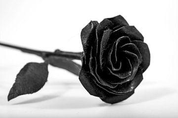 Schwarz-Weiß-Rosenfotografie von Tessa Selleslaghs