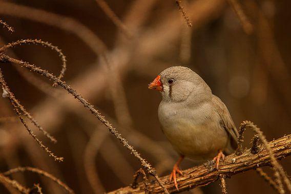 Vogeltje in de vegetatie III