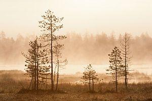 Mistig landschap met bomen bij zonsopkomst van