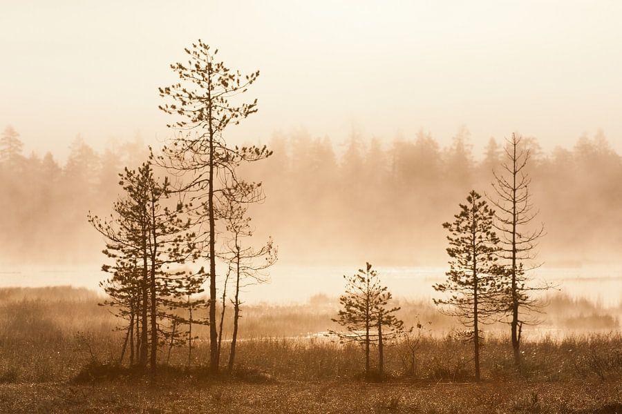 Mistig landschap met bomen bij zonsopkomst