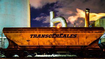 Transcereales 2 von Maarten Drupsteen