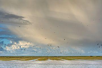 Winterlucht en vogels boven het Noorderleeg in Friesland