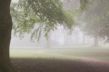 misty morning sur Jacqueline Zwijnen