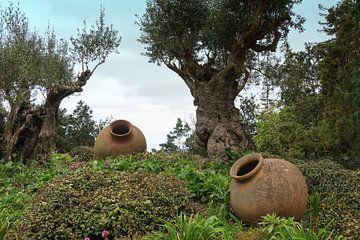 botanical garden in Funchal Madeira van Compuinfoto .