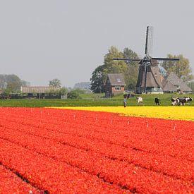 Tulpenveld nabij Opmeer van Tjitte Jan Hogeterp