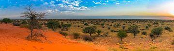 Vroege ochtend in de Kalahari woestijn, Namibië van