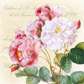 Edle Rose mit gelbem Hintergrund von christine b-b müller