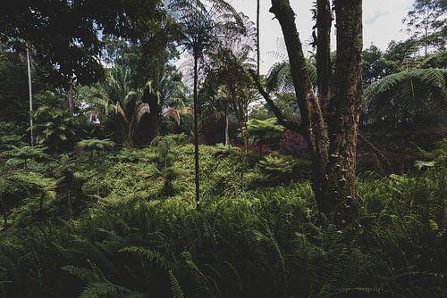 Botanische jungle van