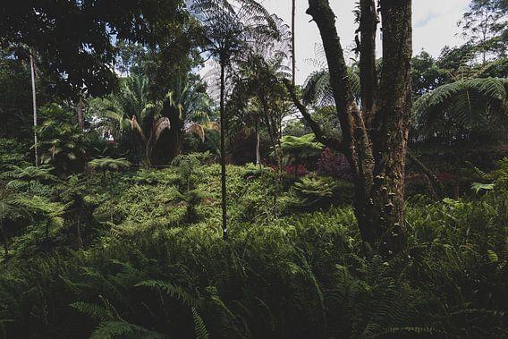 Botanische jungle