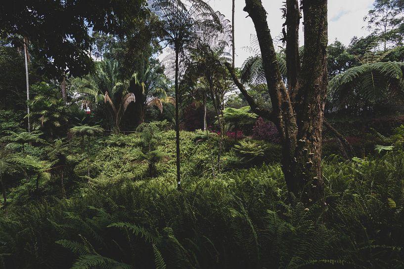 Botanische jungle van Ronne Vinkx