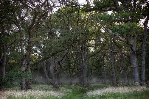 Het griezelige bos