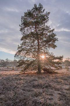 Lever de soleil sur la lande en hiver sur John van de Gazelle