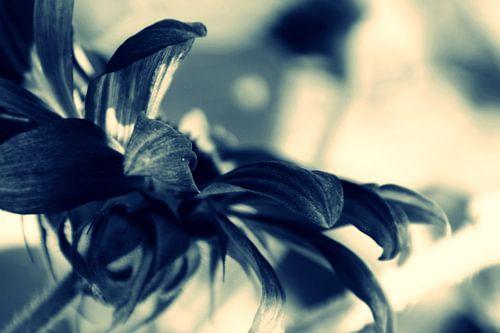 AUTUMN FLOWER - CROSS/PROCESS