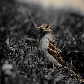 Bird I van Bram van Kattenbroek