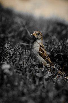 Bird I van