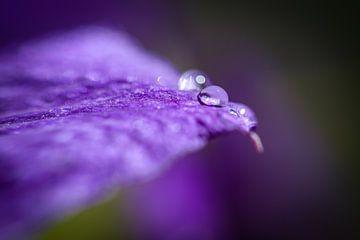 bloem von Manon van Veen