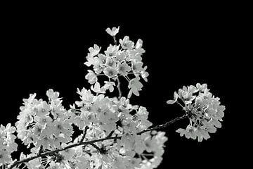Frühlingskontrast von E.H. Efek