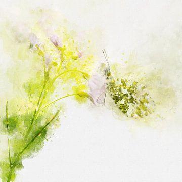 Papillon 5 sur Silvia Creemers