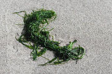 Zeewier in het zand van