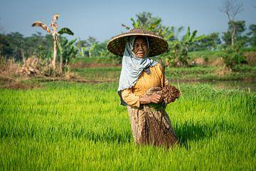 Frau auf den Reisfeldern von Bali von Ellis Peeters