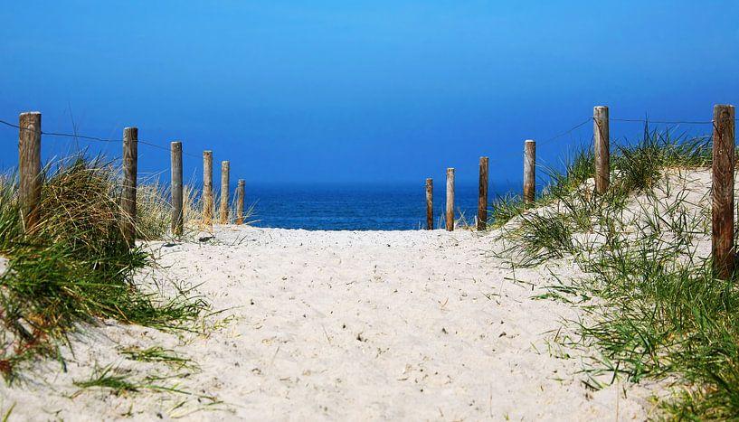 Der Weg zum Meer von Frank Herrmann