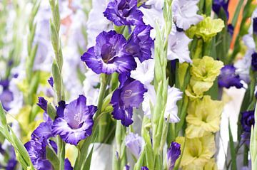 paarse witte en groene Gladiolen von Patricia Verbruggen