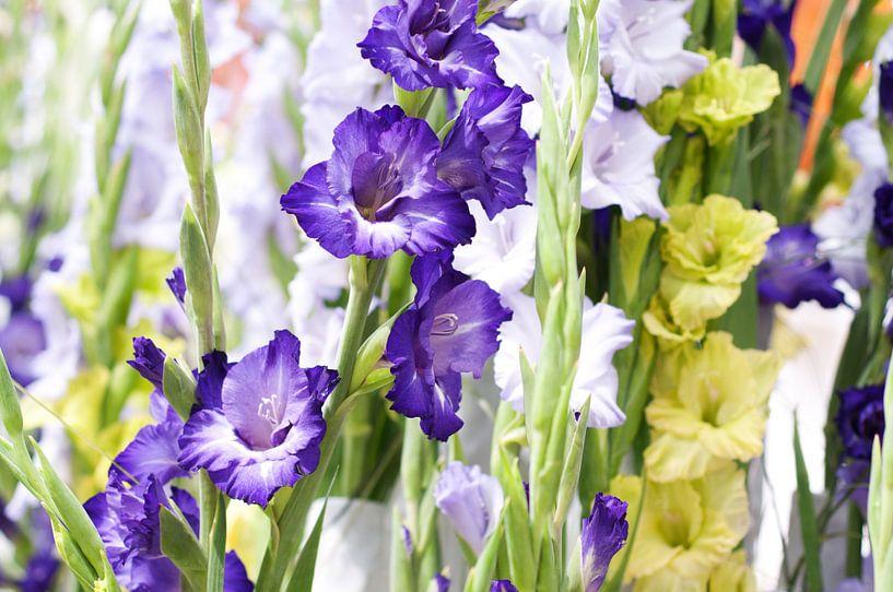 paarse witte en groene Gladiolen van Patricia Verbruggen