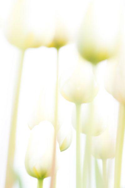 Tulpen in high key sur Minie Drost