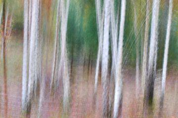 Birkenwald in Bewegung von Ad Jekel