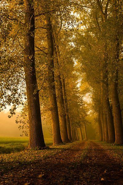 Ontwakend landschap van Sandra Kuijpers