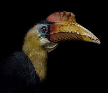 Neushoornvogel van Ron Meijer